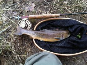 Another view of the brookie in question