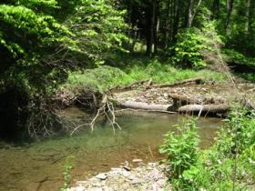 Small native stream