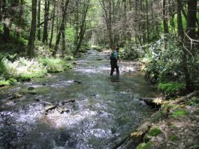 Wissahicken in a flyfisherman's heaven