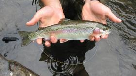 North Branch Bow