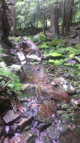 cool mtn stream: 51F at 1PM August 2nd