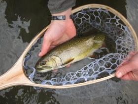 Big Spring Brook Trout
