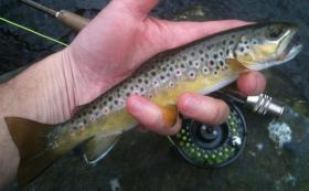 Berks County Brownie