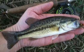 First Bass of 2013