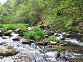 Pretty NW Pa stream