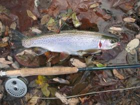 North Branch Rainbow
