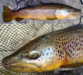 Conodoguinet Creek, CV, 1/2/14