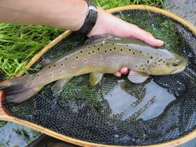 Fishing Creek Brown