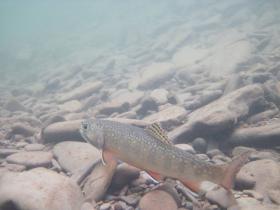 Middle Fork, Savage River Basin