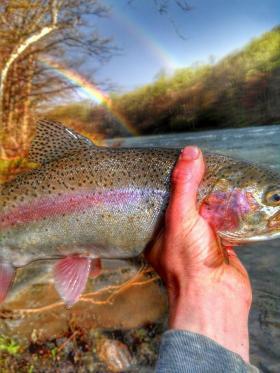 triple rainbow.jpg