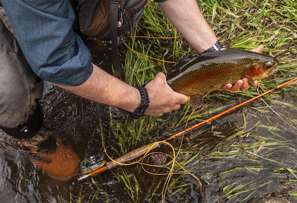 Neshannock Rainbow Trout