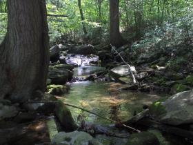 dauphin county brookie stream