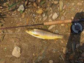 nice york county wild brown