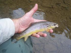 North Branch Wild Brownie