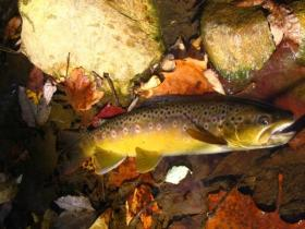 fall perry county brown