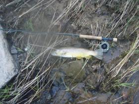 Genral fishing