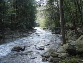native stream in swpa