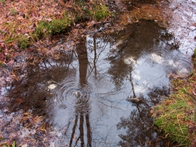 Bubbling Spring