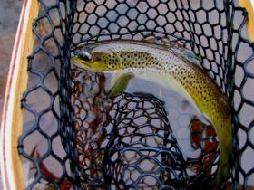Brown from small SEPA stream