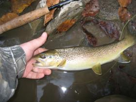 Another Penns brown