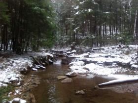 Native Brookie Stream