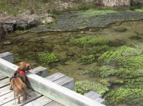 Benny at Big Spring Creek