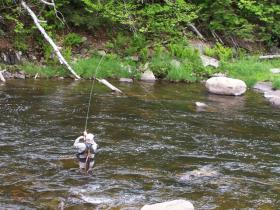 Fighting a trout on the Ausable River, NY